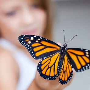 Build Your Own Butterfly Habitat